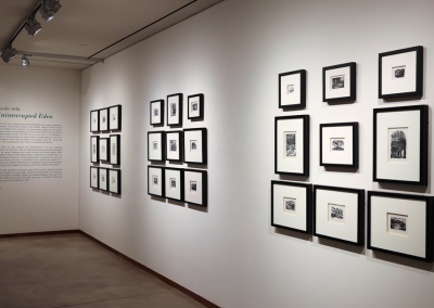 Installation view of Lucille Oille: Uninterrupted Eden, MacLaren Art Centre, 2019. Photo: Andre Beneteau