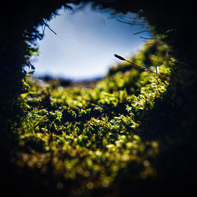 A Closer Perspective by Carson Bath, digital photograph - Nantyr Shores Secondary School